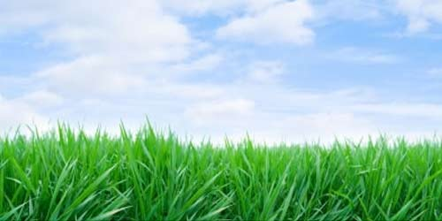green-grass-blue-sky